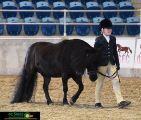 Phoebe Blanc show cases her adorable pony, Kristamoor Lodge Kieran in the Primary Show Horse.