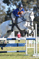 Phoebe Oats representing the Garah Boomi Pony Club from Zone 8 rode her eye catching, 'King Indy' to fifth place in the 13 and Under 15 B Grade AM5 on day one of the PCA NSW State Showjumping Championships conducted at Morisset Showgrounds.