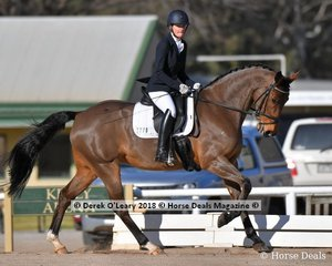 """RIGHT ROYAL"" ridden by Fiona Manifold in the Novice 2.1"