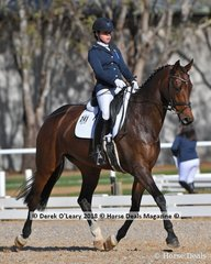 """""""ZOE"""" ridden by Georgina Foot in the elementary Teams event"""