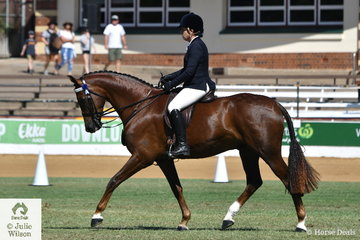 Tina Armstrong's, 'Dicavalli Royal Guess' (Royal Gregor/D.Donna Rosita) took fourth place in the class for Warmblood Under Saddle.