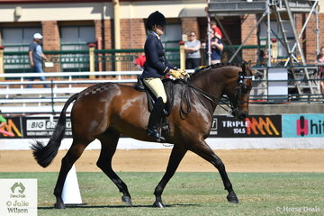 Tess o'Connor's well performed, Show Hunter, 'D'Artagnan' (Falsterbo/Wf Rapture) was declared Supreme Champion Led Warmblood Exhibit and later went on to claim the class for Warmblood Under Saddle.