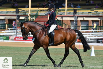 Jenny Kunde's, Champion Led Warmblood Stallion, 'KPH Trogan The Greek' (Northern Classic/Serene Elegance) took fifth place in the class for Warmblood Under Saddle.