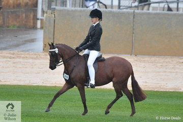 A Harding and M Gibbs', 'Ascot Jadore' took second place in the class for Novice Pony N/E12hh.