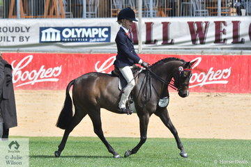 Millicent Quigley-Smith's, 'Harrington Park Panache' took third place in the class for Novice Pony 12-12.2hh.