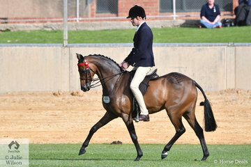 Looking young enough to go back to Pony Club, professional rider, Greg Mickan from Victoria rode Shelley and Chris Pollard's, 'Carlingford Park Honour High' to win the class for Novice Pony 13.2-14hh.