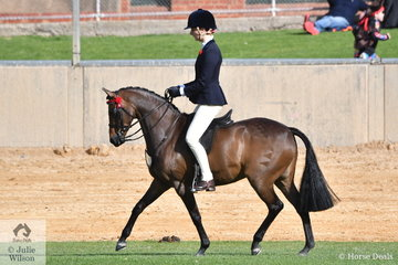 Darci Walsh's, 'Wyoming Park Chicago' took second place in the class for Novice Pony 13.2-14hh.