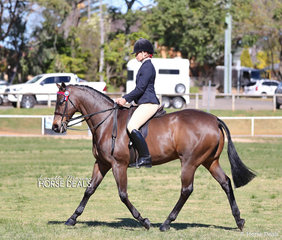 "Class winners in the Show Hack ring - Kirsten Strath riding Rhonda Bromley's ""Black Markane""."