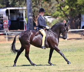"Reserve Champion Show Hunter Galloway ""EBL One Night In Paris"" ridden by Supreme Rider of the Show - Hunter Taylor."