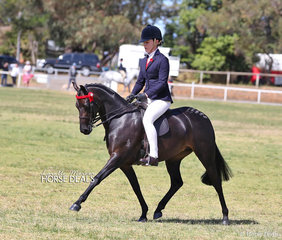 "Martine Duncan and ""Argyle Harmony"" photographed during their workout which won them Champion Large Pony."