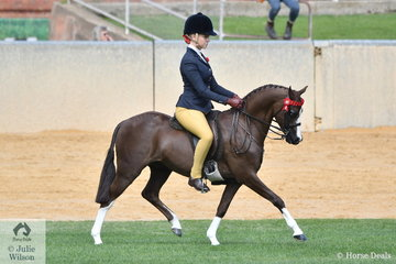 Izabella McIntyre rode Blaine Perkins', 'Mirinda Boy Toy' to third place in the class for Open Pony 12-12.2hh.