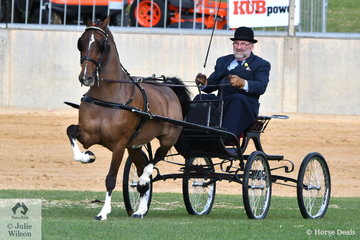Adelaide Royal legend, Andy Cusack drove the Holberton and Cusack nomination, 'Makari Victory Light' to claim the Reserve Champion Hackney Horse award.