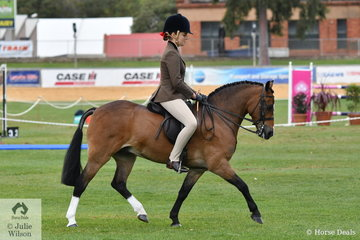 Kylie Herbut's typey, 'Rivington Marco Polo' took third place in the class for Open Show Hunter Pony 12.2-13hh.