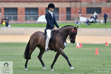 A busy and successful Ty Zoontjens is pictured aboard, Shayleigh Joblin's, 'Maxwell Matador Royale' during the class for Open Pony 13.2-14hh.