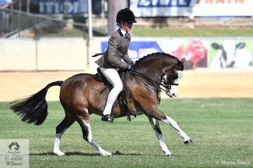 Dallas Merry shows off a super gallop aboard Andrea Merry's wonderful 'Splashdance' that was declared Reserve Champion Show Hunter Pony N/E 12.2hh.