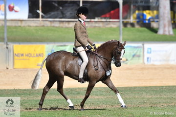 Kate Kyros claimed a hat trick of Adelaide Small Show Hunter Pony Championships today with her delightful Victorian bred, 'Owendale Beesting'.