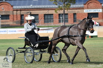 Janet Exell drove her, 'Yanina My Sweet Fantasy' to third place in the class for Non Hackney Harness Pony 13-14hh.