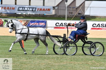Julie Abrehart drove her, 'Eagle Park Starburst' to win the class for Non Hackney Harness Pony 11-12hh and went on to claim the Non Hackney Harness Pony Reserve Championship.