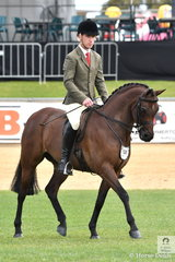 Jaques Manuels rode Michelle McLean's, 'Joemoor Splendas' to win the class for Show Hunter Gelding 12.2-14hh.