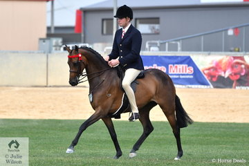 Greg Mickan rode Shelley and Chris Pollard's, 'Carlingford Park Honour High' to win the class for Novice and Open Pony 13.2-14hh and claim the 2018 Adelaide Royal Large Pony Championship.