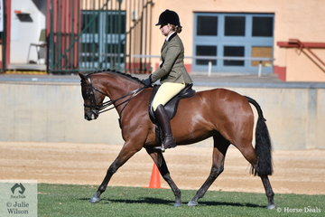 Ashleigh Shearer rode her, 'Dynasty Park Indiana' to take third place in the class for Novice Show Hunter Galloway 14-14.2hh.