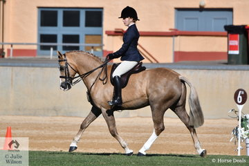 Kristy Santoro's, 'Rockfire Flickpass' took fourth place in the class for Novice Show Hunter Galloway 14-14.2hh.