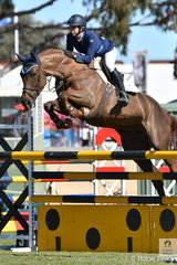 Angela Dobbin is having a great show and is pictured aboard Wendy Keddle's super, 'Miranda MVNZ' that took fourth place in the Part 3 jump off class today.