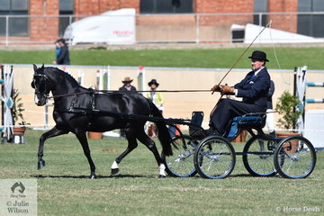 Andrew James is on a roll with his own and Corinne Collins' outstanding harness pony, 'Rose Air Manikato'. The typey black pony was declared Champion Non Hackney Pony and went on to take out the Bill Mosey Memorial Trophy for Supreme Champion Light Harness exhibit.