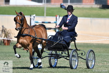 Chris Lawrie, yes that Chris Lawrie drove his own and Anne Lindh's beautiful Hackney Pony, 'Hudson Wildcard' to claim the Hackney Pony Championship. It seems that the outstanding horseman can turn his hand to anything equine.