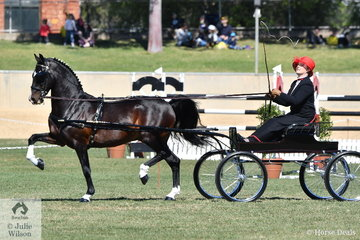 Melissa Bensley drove the outstanding Jones and Bensley nomination, 'Cherry farm Alarick' to claim the Hackney Horse Championship.