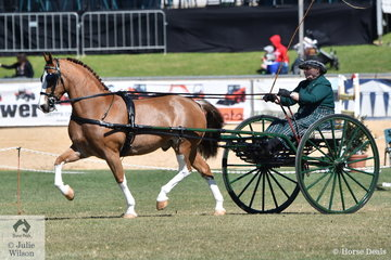 Always beautifully presented and colour co ordinated and successful. Elsa Avery drove her, 'Crosswynds Our Brenin' to claim the Non Hackney Harness Horse Championship.