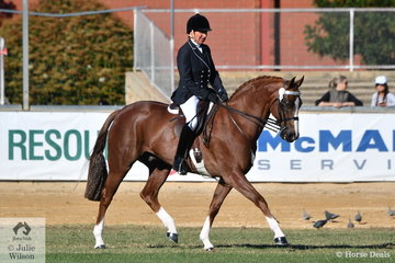 Succcessful showing exhibitor, Shelley Penny from Gippsland in Victoria rode her, 'Sheldene Chicago' to fourth place in the class for Novice Hack 15-15.2hh.