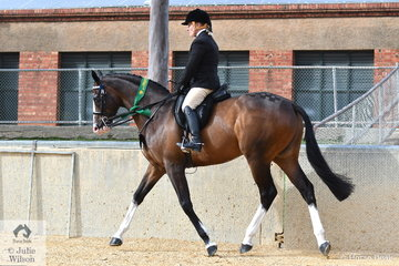 The Patterson and Barnes nomination, 'Crown Street Obsession' took fifth place in the class for Novice Hack Over 16.2hh first up this morning.
