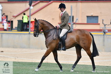 Josh Clarke took second place in the class for Open Show Hunter 15.2-16hh with his, 'Show Girl'.