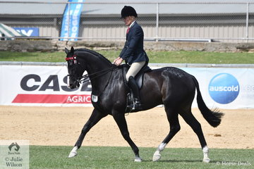 Chris Lawrie, back in riding attire is pictured aboard his own and Terry van Heythuysen's Novice 15.2-16hh winner, 'Stateyourbusiness' during the Best Novice Hack ride off.