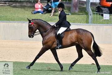 Jessica Burns rode her splendid Thoroughbred, 'Macquarie' to win the class for Novice Hack Over 16.2hh and went on to claim the Best Novice Hack award.