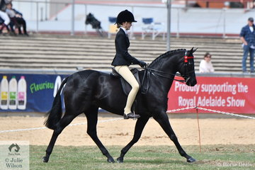 Denim Moloney rode her well performed, 'Wesswoods Supa Caste' to second place in the class for Open Galloway 14-14.2hh.