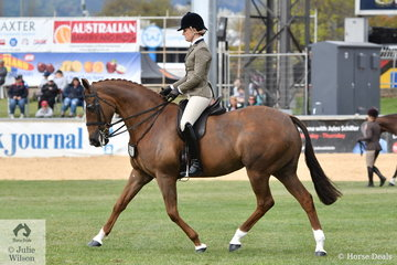 Lesley Burrowa rode her, 'Dark Secrets' to take second place in the Millionaire Memorial Show Hunter class today.