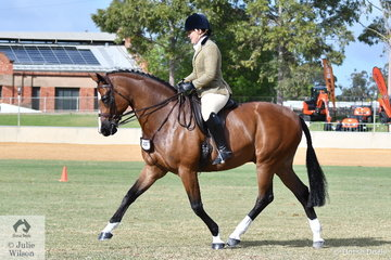 Successful South Australian rider, Andrea Merry rode her impressive, 'Quantador' to win the class for Open Show Hunter 15.2-16hh.
