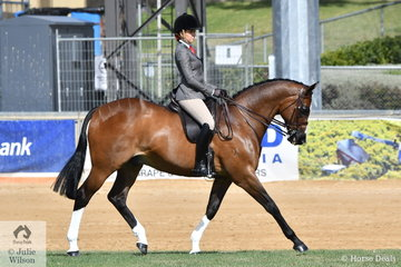 Amelia Hooper's well performed, 'SLM Mastermind' took fourth place in the class for Open Show Hunter 15-15.2hh.