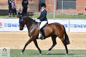 S Adams and K Strooper's nomination, 'Vasari' took third place in the class for Open Hack 15.2-16hh.