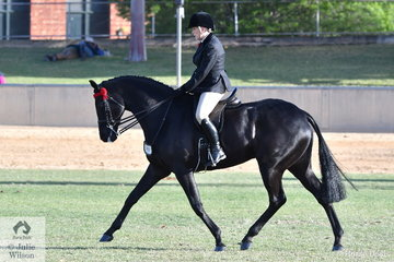 Christine Frost is pictured aboard her, 'Ink'. that was second in the class for Open Hack 16-16.2hh and third in the Lady's Hack class. If that was not enough, Christine and Ink went on to claim the Racing SA Hack Premier Award for Horses Showing Outstanding Thoroughbred Qualities.