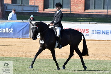 Tonia Scaife's, 'DS Tulara Fursandro' took fourth place in the class for Lightweight Hack.