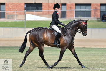 Belle Ker rode her lovely, 'Aria V Allegro' to win the class for Open Galloway 14.2-15hh and today they claimed the 2018 Adelaide Royal Galloway Championship.