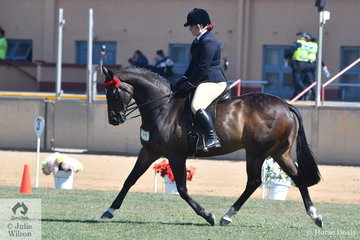 Alyssia Giustozzi's, 'Harlow' took second place in the class for Heavyweight Hack.