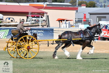 Russell March drove the Glenquarry Clydesdales', 'Glenquarry Myfanwy' to take out the Deliver Horse Reserve Championship.