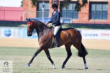 Greg Mickan rode Terry van Heythuysen and Edwina Cullen's outstanding 2017 National Champion Large Hack, 'Lordz' to work beautifully and claim the 2018 Adelaide Royal Hack Championship.