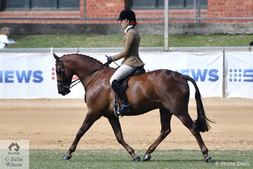 With usual rider, Di McDonald getting used to her new knees, Shelley Howard stepped aboard Di and Tony Bayley's very well performed 14.2-15hh winner, 'Dunelm Icon' to ride away with the 2018 Royal Adelaide Show Hunter Galloway Championship.