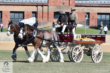 The Caversham Clydesdales', 'Aurora Flash Joker' and 'Caversham Charles' claimed the Multiple Delivery Horse Championship.