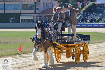 The Glenquarry Clydesdales', 'Wheelbarraback Flash Bonnie' took out the Resource Co Prize for Supreme Champion Heavy Harness Exhibit. Russell March is at the reins with Kerry Anne March and Damien Pugsley along to do the heavy lifting.